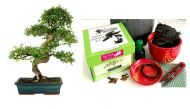 Premium Bonsai Kit in Gift Box (Chinese elm) 8Piece,Includes CERAMIC Pot